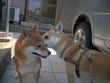 a-dogIMGP3172.jpg