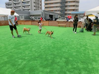 s-dogCIMG2184.jpg