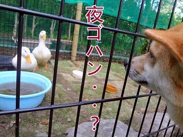 s-dogDSC00076.jpg