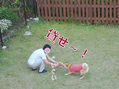 s-dogDSC00098.jpg