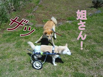 s-dogDSC00152.jpg