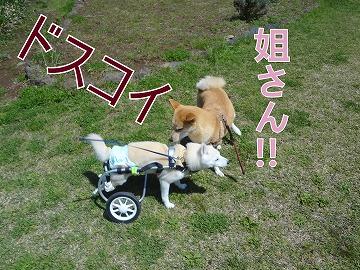 s-dogDSC00153.jpg