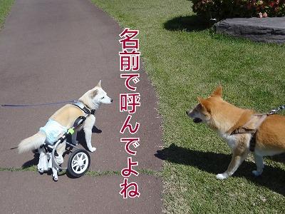 s-dogDSC00162.jpg