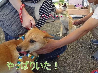 s-dogDSC00831.jpg