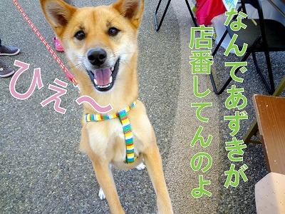 s-dogDSC00880.jpg