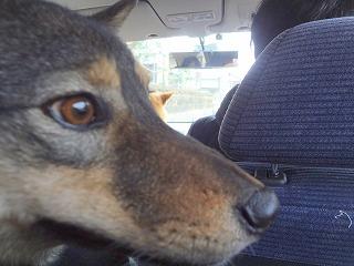 s-dogDSC05294.jpg