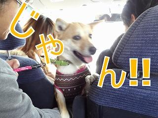 s-dogDSC05295.jpg