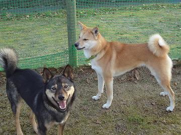 s-dogDSC05542.jpg