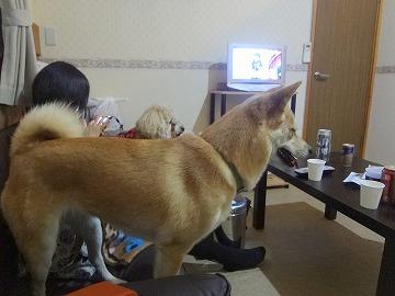 s-dogDSC06132.jpg