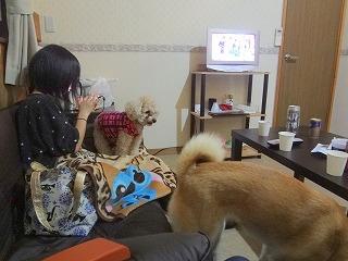 s-dogDSC06133.jpg