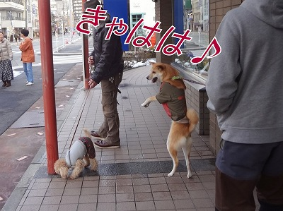 s-dogDSC06226.jpg