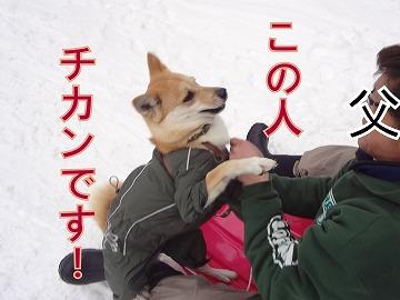 s-dogDSC06572.jpg