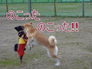 s-dogDSC06861.jpg