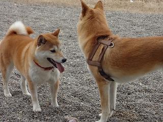 s-dogDSC07074.jpg
