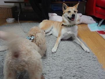 s-dogDSC07211.jpg