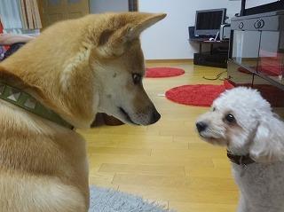 s-dogDSC07269.jpg