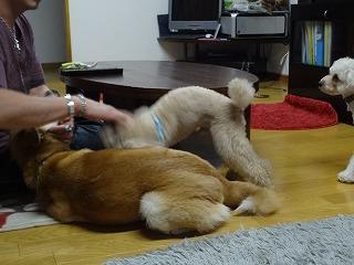 s-dogDSC07309.jpg