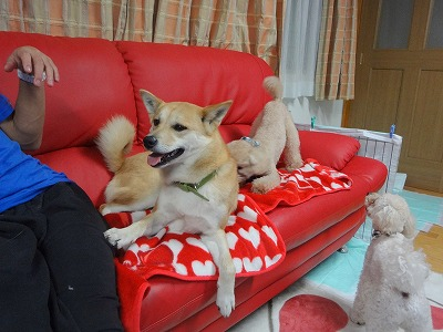 s-dogDSC07324.jpg