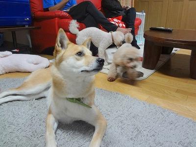 s-dogDSC07359.jpg