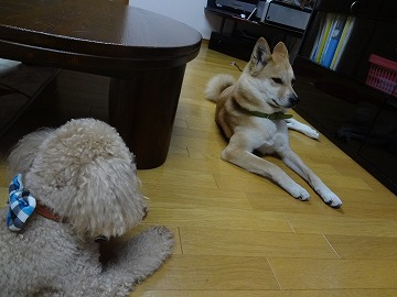 s-dogDSC07443.jpg