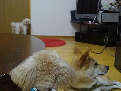 s-dogDSC07446.jpg