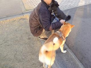 s-dogDSC07469.jpg