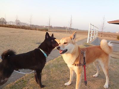 s-dogDSC07487.jpg