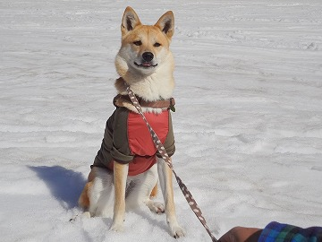 s-dogDSC07890.jpg