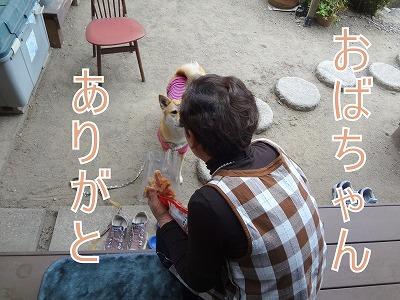 s-dogDSC09422.jpg