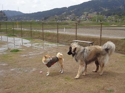 s-dogDSC09616.jpg