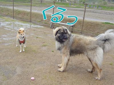 s-dogDSC09619.jpg