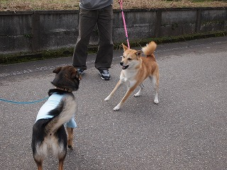 s-dogP2032876.jpg