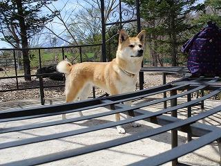 s-dogrun1IMG_2338.jpg