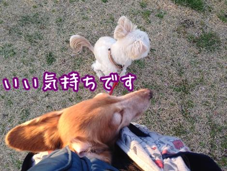 IMG_6481.jpg