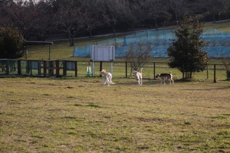 2014-03-09 show応援_キャンプ 539