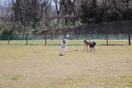 2014-03-10 森のまきばオートキャンプ場 058