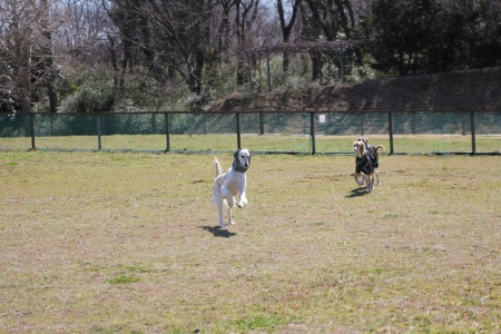 2014-03-10 森のまきばオートキャンプ場 063