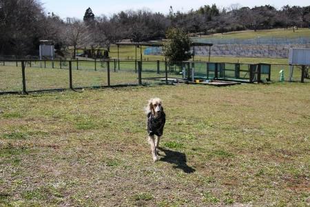 2014-03-10 森のまきばオートキャンプ場 383