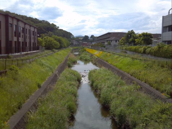 hachiojikawa_convert_20140623020716.jpg