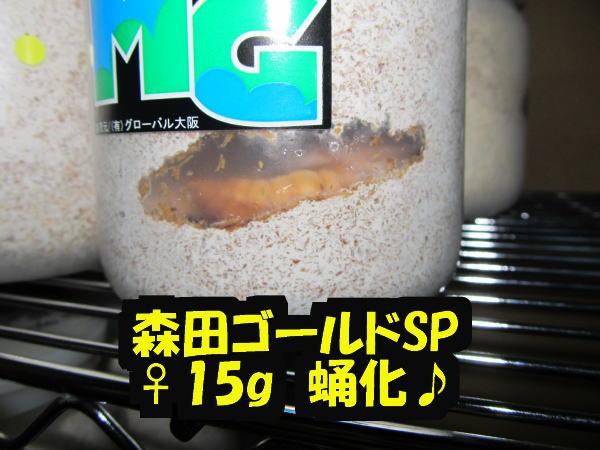 IMG_2129.jpg