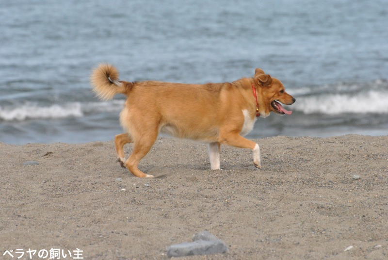 BNK_Dog_DSC_0298.jpg