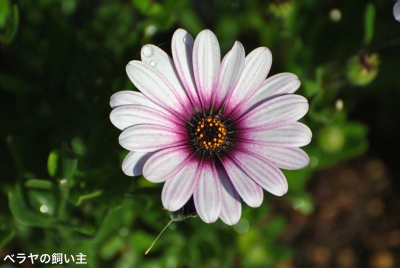BNK_Flower_DSC_1091.jpg
