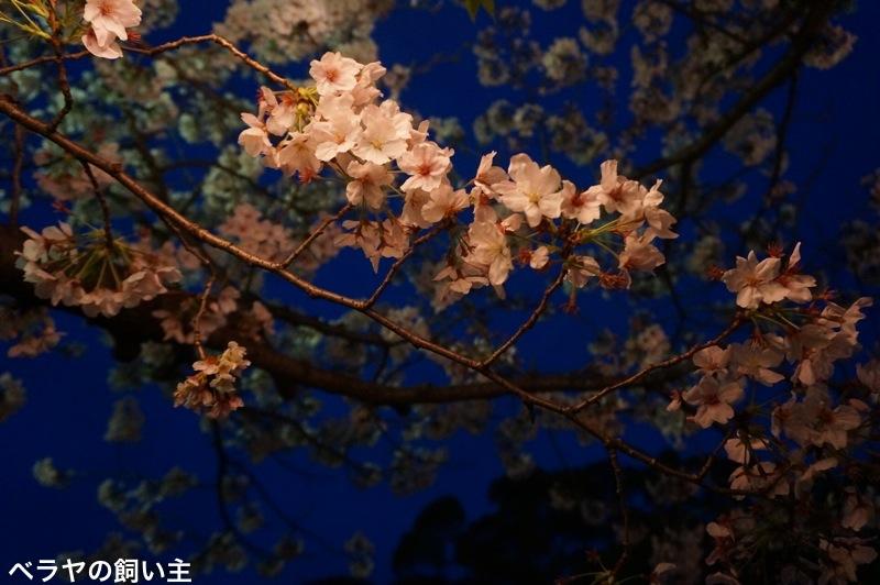 BNK_Kyushu_CB.jpg