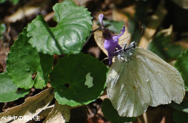 BNK_UI_Butterfly_DSC_1174.jpg