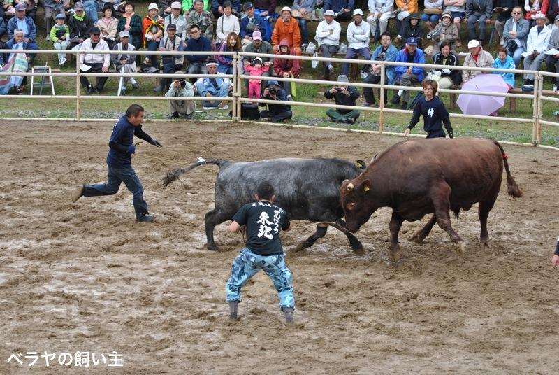 BNK_bullfight_DSC_0041.jpg
