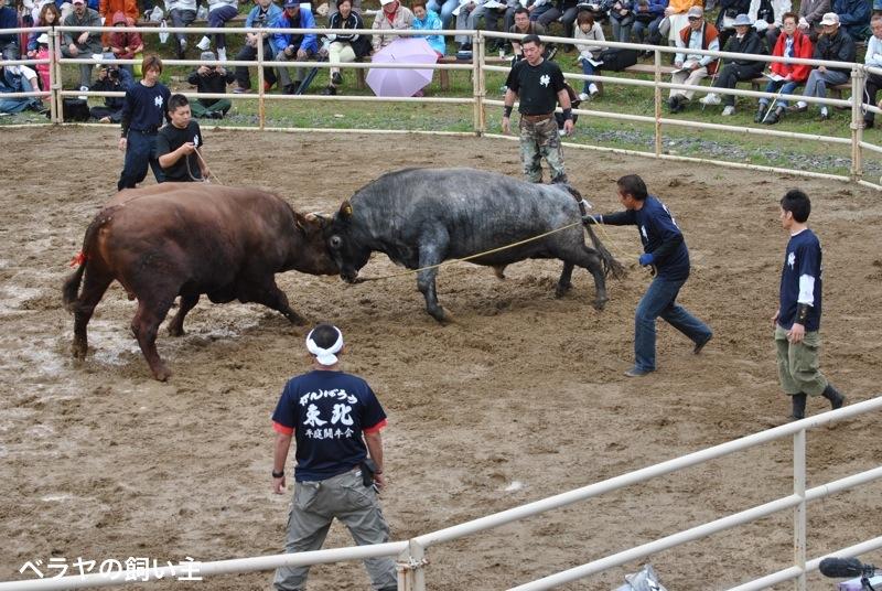 BNK_bullfight_DSC_0061.jpg