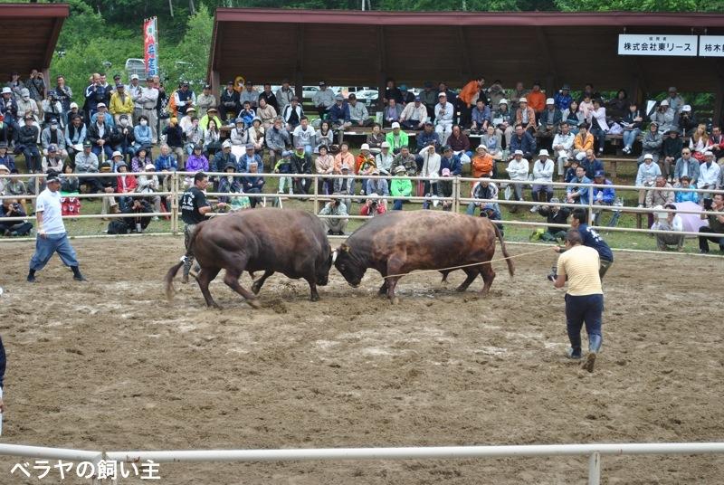 BNK_bullfight_DSC_0159.jpg