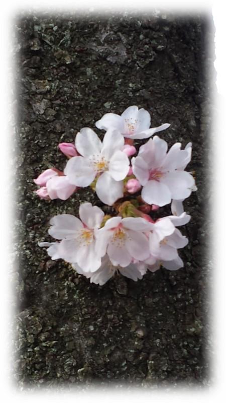 幹にも咲いています。(笑)