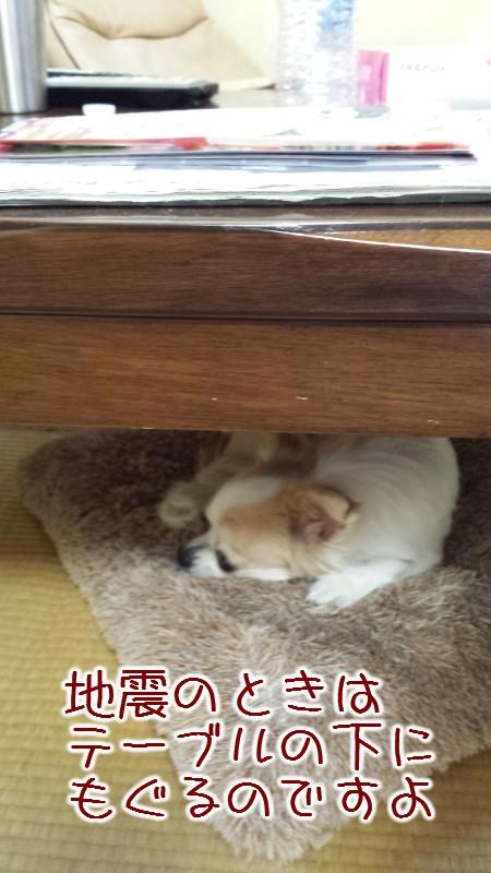 地震には慣れたです。