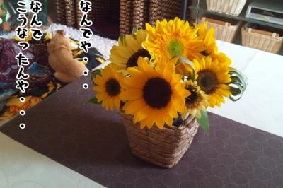 DSC_0004-1.jpg